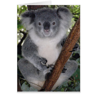 Destiny Zazzle Cute Koala Aussi Outback Greeting Card
