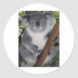 Destiny Zazzle Cute Koala Aussi Outback Round Sticker