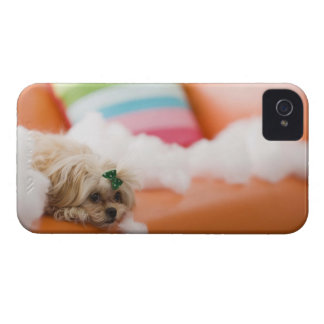 Destructive dog iPhone 4 cases