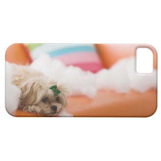 Destructive dog iPhone 5 case