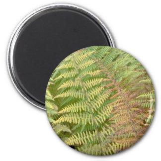 Detail of autumn ferns 6 cm round magnet