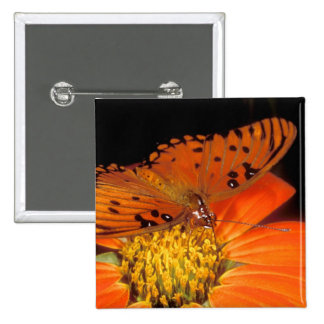 Detail of captive gulf fritillary butterfly on 15 cm square badge