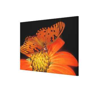 Detail of captive gulf fritillary butterfly on canvas print
