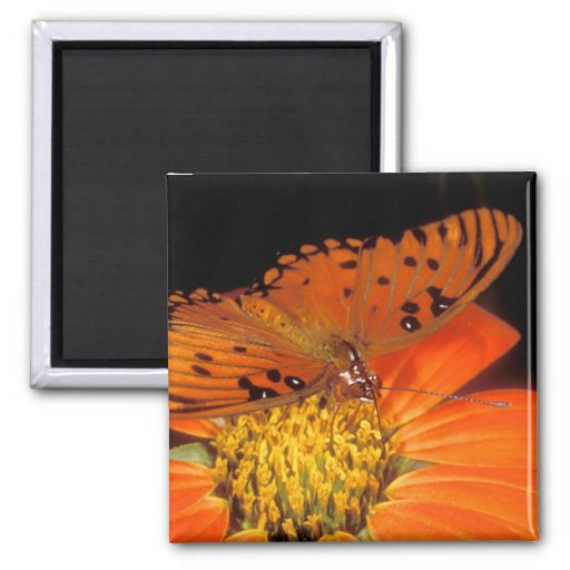 Detail of captive gulf fritillary butterfly on magnet