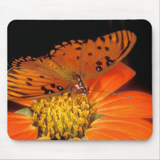Detail of captive gulf fritillary butterfly on mouse pad