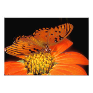 Detail of captive gulf fritillary butterfly on photo print