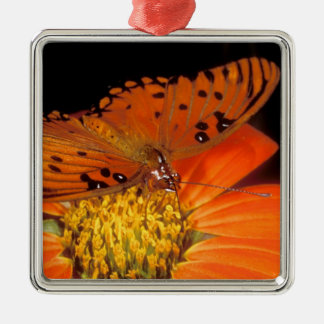 Detail of captive gulf fritillary butterfly on Silver-Colored square decoration
