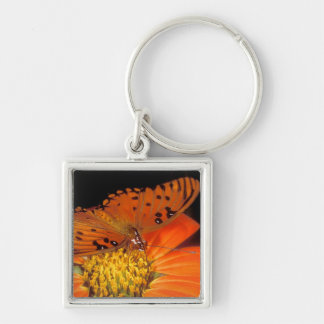 Detail of captive gulf fritillary butterfly on Silver-Colored square key ring