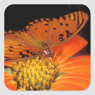 Detail of captive gulf fritillary butterfly on square sticker