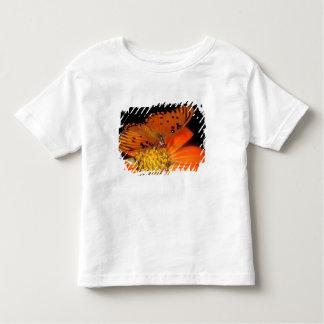 Detail of captive gulf fritillary butterfly on t-shirt