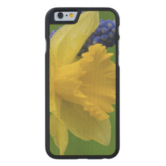 Detail of daffodil and hyacinth flowers. Credit Carved Maple iPhone 6 Case