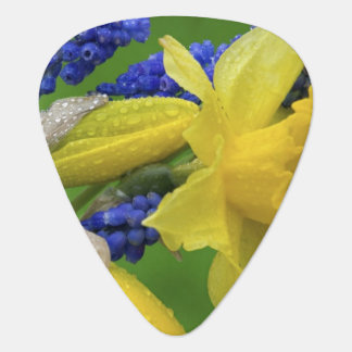 Detail of daffodil and hyacinth flowers. Credit Plectrum