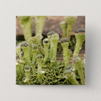 Detail of raindrops on lichen. Credit as: Don 15 Cm Square Badge