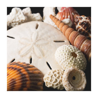 Detail Of Seashells From Around The World 2 Canvas Print