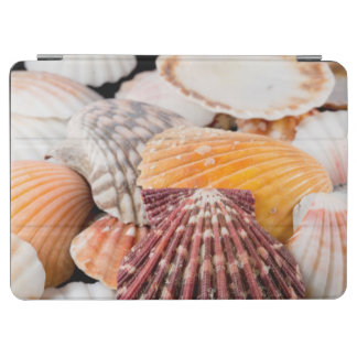 Detail Of Seashells From Around The World 2 iPad Air Cover