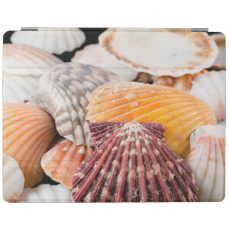 Detail Of Seashells From Around The World 2 iPad Cover