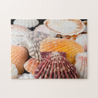 Detail Of Seashells From Around The World 2 Jigsaw Puzzle