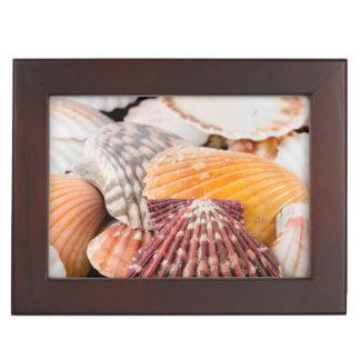 Detail Of Seashells From Around The World 2 Keepsake Box