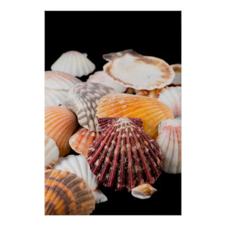 Detail Of Seashells From Around The World 2 Poster