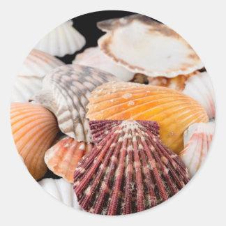 Detail Of Seashells From Around The World 2 Round Sticker