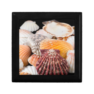 Detail Of Seashells From Around The World 2 Small Square Gift Box