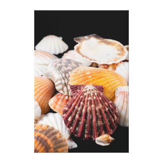 Detail Of Seashells From Around The World Canvas Print