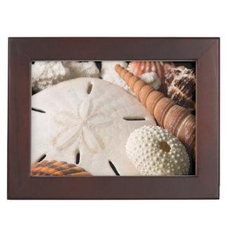 Detail Of Seashells From Around The World Keepsake Box