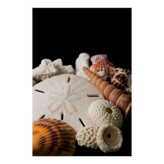 Detail Of Seashells From Around The World Poster