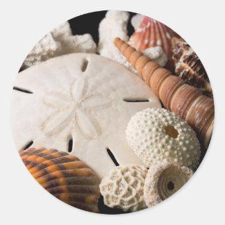 Detail Of Seashells From Around The World Round Sticker