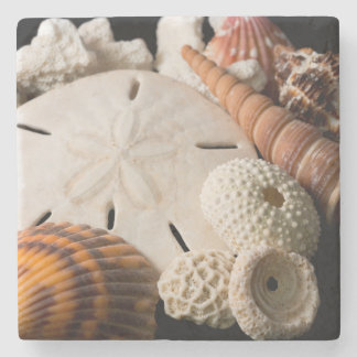 Detail Of Seashells From Around The World Stone Coaster