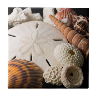 Detail Of Seashells From Around The World Tile