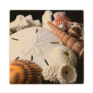 Detail Of Seashells From Around The World Wood Coaster