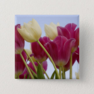 Detail of tulips. Credit as: Don Paulson / 15 Cm Square Badge