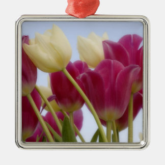Detail of tulips. Credit as: Don Paulson / Silver-Colored Square Decoration