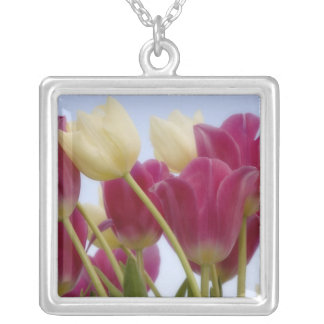 Detail of tulips. Credit as: Don Paulson / Silver Plated Necklace