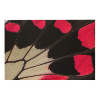 Detail Wing Pattern of Tropical Butterfly Wood Wall Art