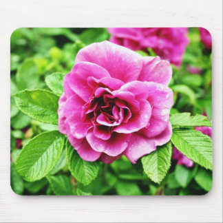 Detailed Image Of Rose Flower 3 Mousepads