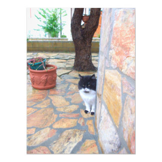 DETECTIVE CAT BEHIND THE STONE WALL CARD