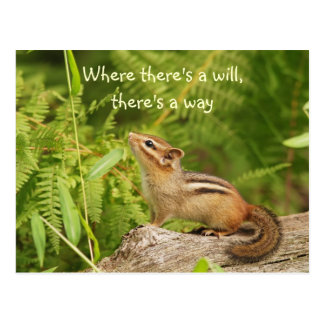 Determined Baby Chipmunk Postcard