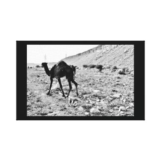 Determined Camel Canvas Print