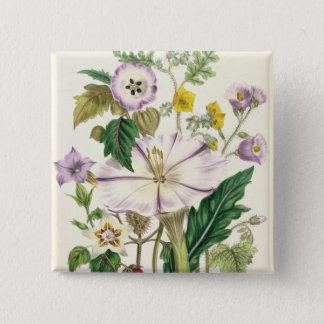 Devil's Trumpet, plate 46 from 'The Ladies' 15 Cm Square Badge