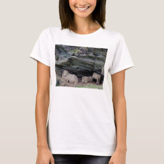 Devon Long Wool Sheep Family Sheltering T-Shirt