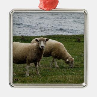 Devon long wool sheep on remote south Devon coast Christmas Ornament