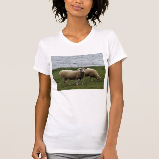 Devon Longwool Sheep Grazeing On Remote Coastline T-Shirt