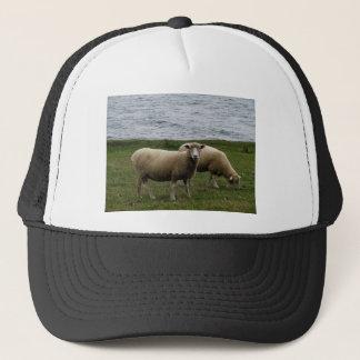 Devon longwool sheep on remote south devon coast trucker hat