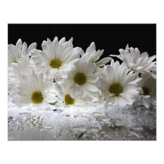 Dew and Daisies Photo