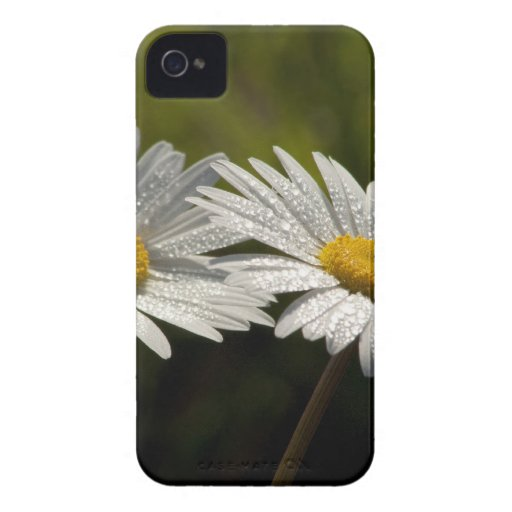Dew Bejeweled Ox-eye Daisy Wildflowers iPhone 4 Cover
