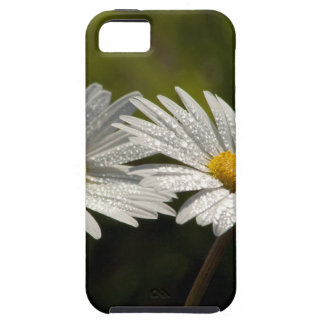 Dew Bejeweled Ox-eye Daisy Wildflowers iPhone 5 Case