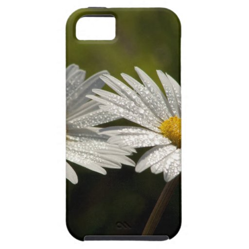 Dew Bejeweled Ox-eye Daisy Wildflowers iPhone 5 Case