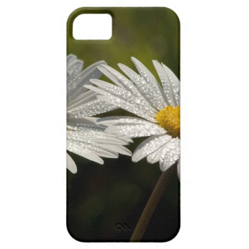 Dew Bejeweled Ox-eye Daisy Wildflowers iPhone 5 Cases